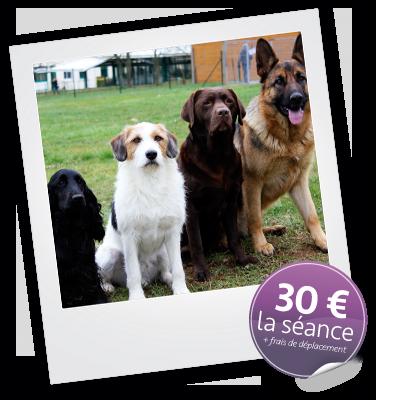 Tarif prix séance éducation canine